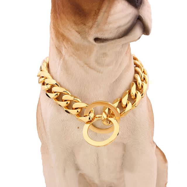Golden Color Dog Collar