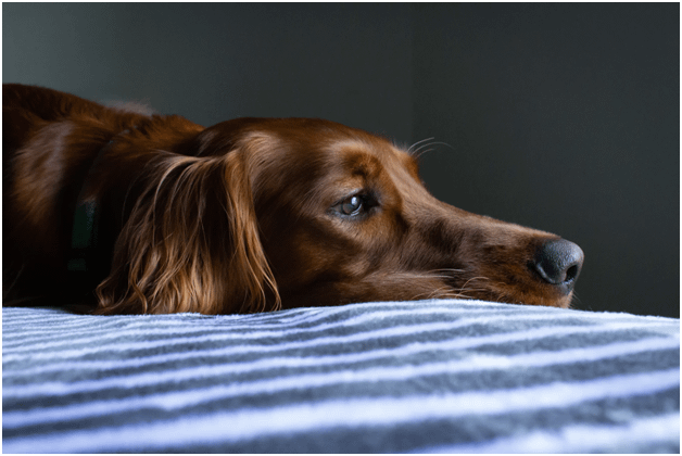 10 Things Your Dog Wants You to Know